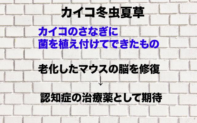 カイコ冬虫夏草.jpg