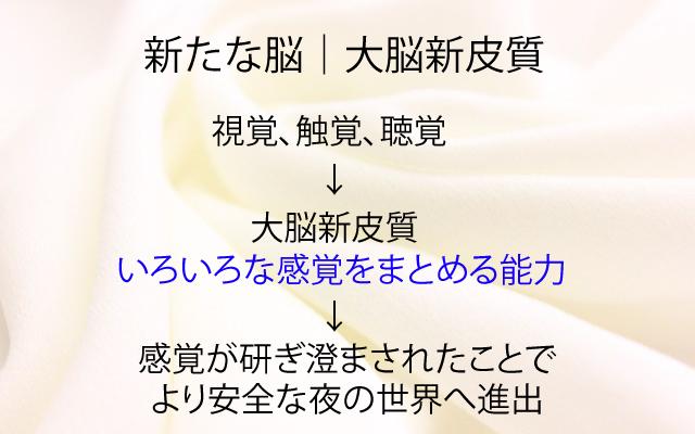 NHKスペシャル|大脳新皮質.jpg