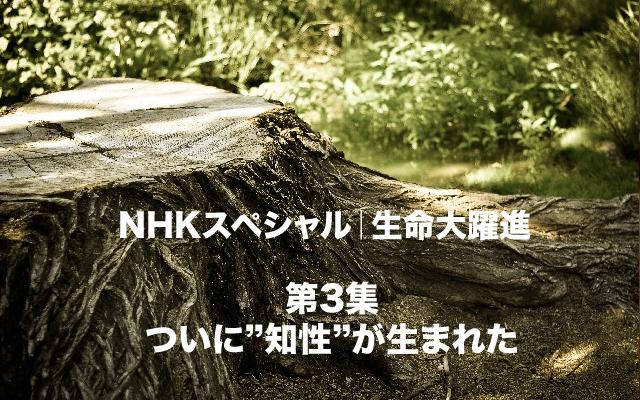 NHKスペシャル|生命大躍進知性誕生.jpg