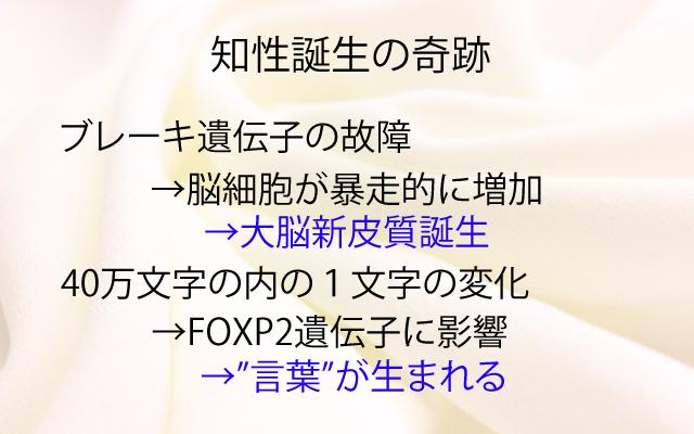 NHKスペシャル|知性誕生の奇跡.jpg